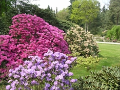 Rhododendronpark in Westerstede