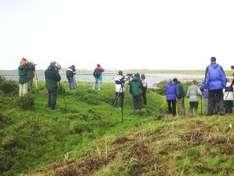 Zugvögel an der Nordsee beobachten (Foto ©Nationalparkverwaltung Schleswig-Holsteinisches Wattenmeer)